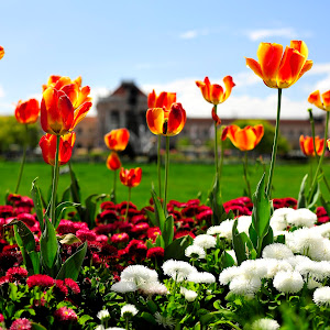 Cvijeće....JPG