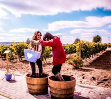 Harvest Experience Emina Rueda