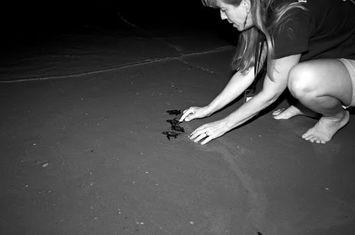 KSC WILDLIFE TURTLE RELEASE FROM PLAYALINDA - GULF RESCUE OPS.
