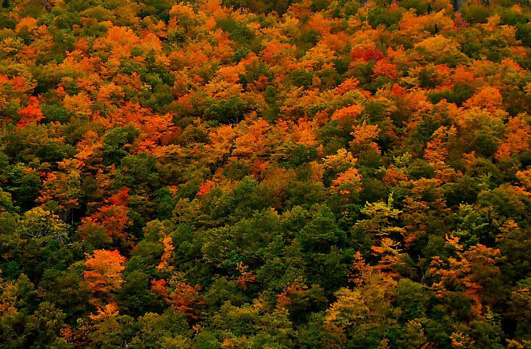 Fall colors on Cape Breton Island, Nova Scotia. (Click to enlarge.)