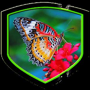 Krása motýlích křídel - náhled