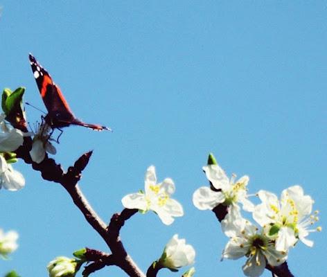 Libera come una farfalla.  di micphotography