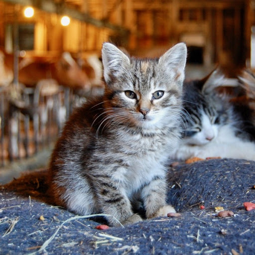 cat 02.jpg