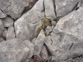 Photo: Vida entre les pedres.