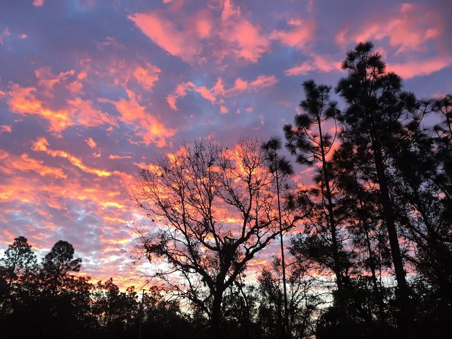 Red Sky in the Morning  by Debbie Squier-Bernst - Instagram & Mobile iPhone