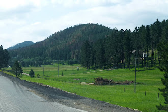 Photo: They are called the Black Hills due to the dark Ponderosa Pines.