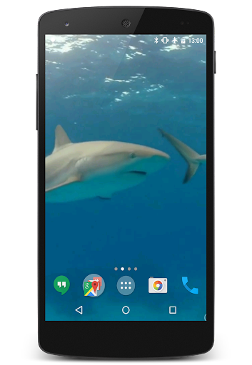Sharks Video Live Wallpaper