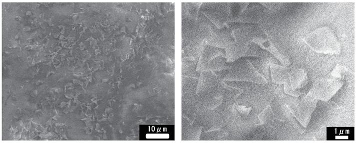 ソフトキャンディー表面の走査型電子顕微鏡像