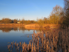 Photo: Priorslee Lake The main reed-bed has yet to sprout this year and so the low sun makes this look almost autumnal. (Ed Wilson)
