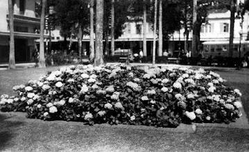 Photo: Praça dos Expedicionários. As até então abundantes hortênsias, que inclusive deram o epiteto a Petrópolis de Cidade das Hortênsias.