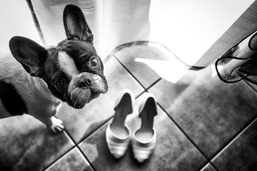 Wedding photographer Barbara Fabbri (fabbri). Photo of 02.06.2015