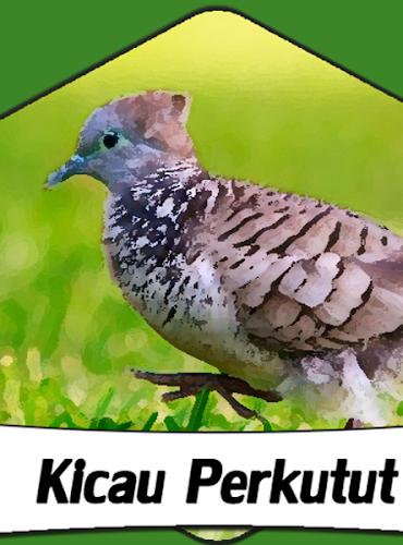 Download Suara Burung Perkutut 1000 Kicau Apk Latest Version For Android
