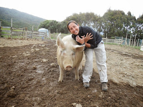 Photo: Otaki avec un cochon du Black Sheep Sanctuary (Nouvelle-Zélande)