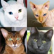 Cats Quiz - Guess Photos of All Popular Cat Breeds