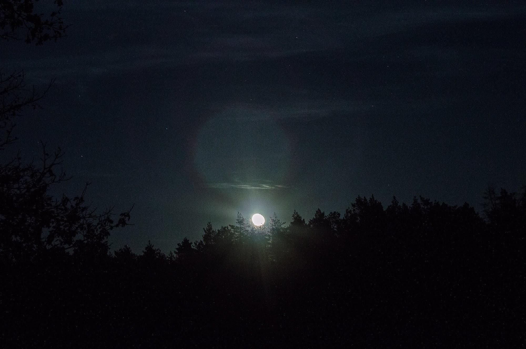 Місяць сходить зза лісу