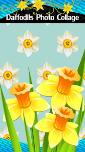 Daffodils Photo Collage - náhled