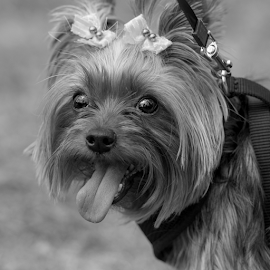 by Judy Rosanno - Black & White Animals ( kite and tail festival )