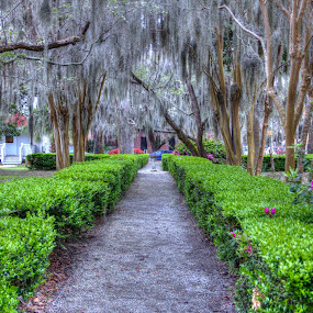 Common by Keith Wood - City,  Street & Park  City Parks ( kewphoto, hdr, park, beaufort sc, keith wood, renewal, green, trees, forests, nature, natural, scenic, relaxing, meditation, the mood factory, mood, emotions, jade, revive, inspirational, earthly,  )