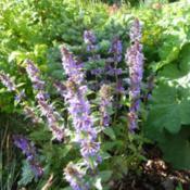 Location: My garden, Calgary, Alberta, Canada; zone 3.Date: 2012-12-04
