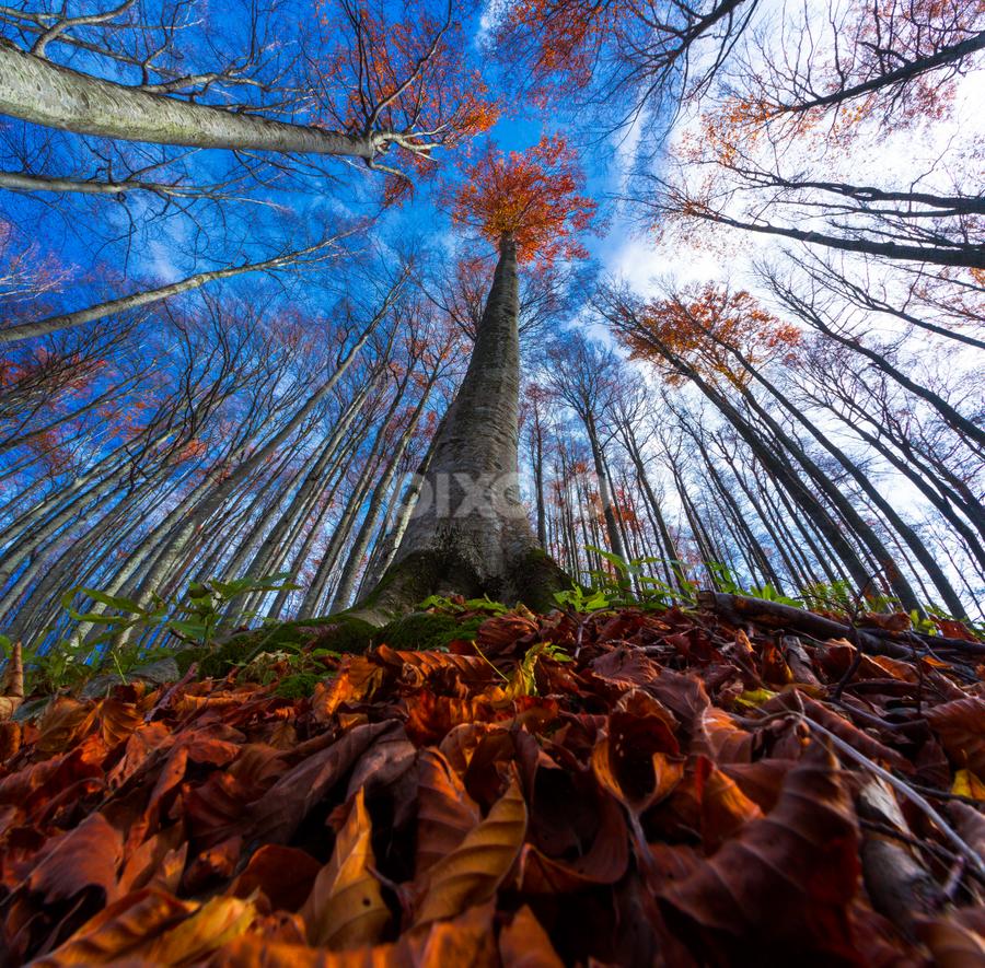 Beech tre by Stanislav Horacek - Nature Up Close Trees & Bushes