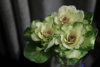 Photo: White Kale