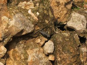 Photo: Lizard