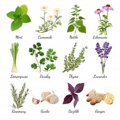 Spices and meadow flowers herbal set Free Vector