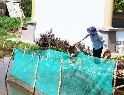 Mùa mưa về vườn quốc gia U Minh Hạ đặt lờ bắt cá 4