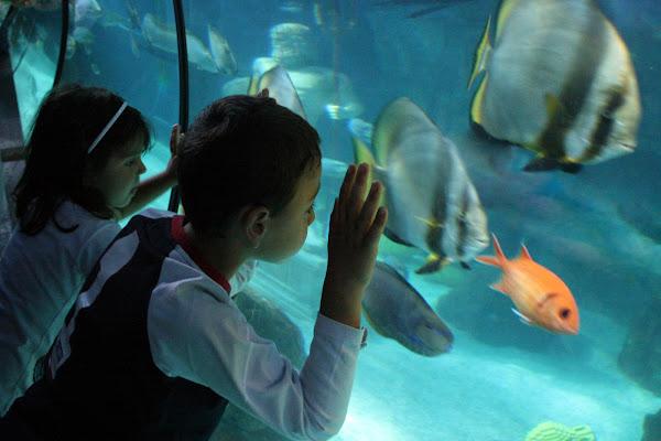 Under the sea di rosarionotaro@gmail.com