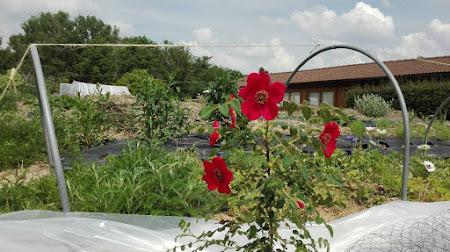 foto Ecologische bloembinderij