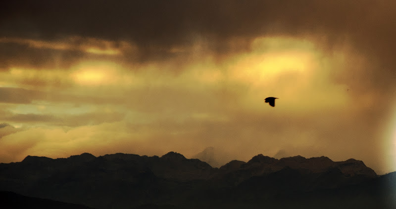 Golden Sky  di Jrene Borgo
