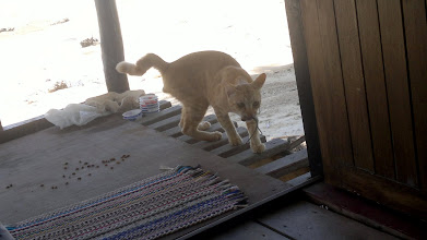 Photo: Bye bye cat from old place...