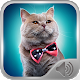 Cat Sounds Ringtones (app)