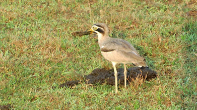 Photo: Yala National Park - (c) wsylvie 2015
