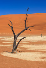 Photo: Sossusvlei, Namibia  For #TreeTuesday, curated by +Shannon S. Myers and +Christina Lawrie
