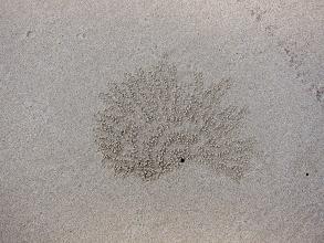 Photo: Crab art