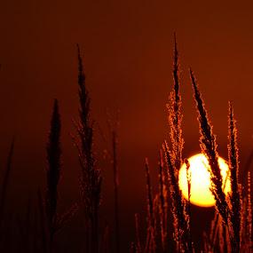 Burning field  by Akash Deep - Landscapes Prairies, Meadows & Fields ( field, sunset, meadow, burning sun, golden hours, golden hour )