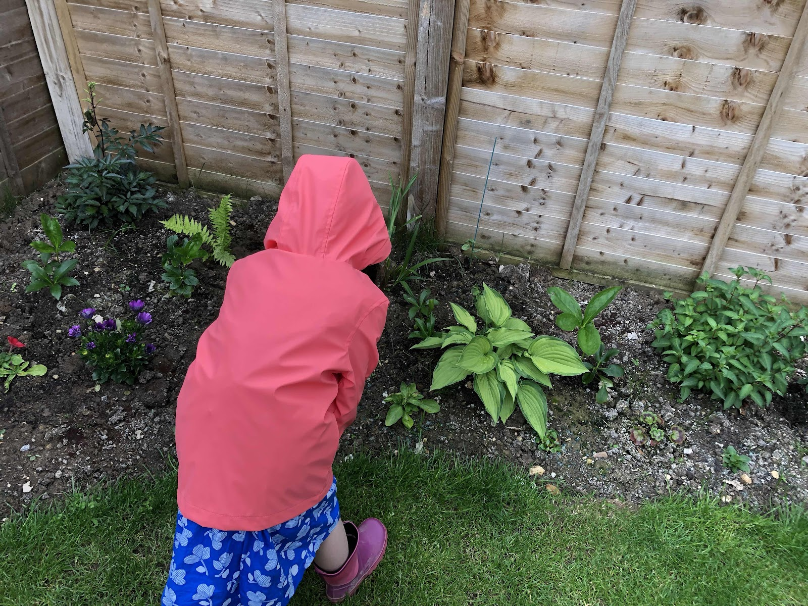 Garden bug hunt