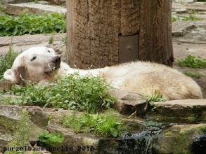 Photo: Knut lugt aus seiner Schlafkuhle ;-)