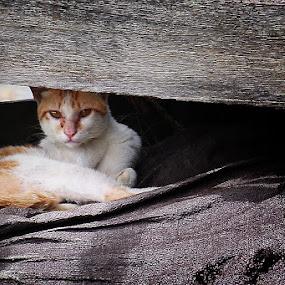 by Heru Sulistiono - Animals - Cats Portraits