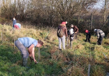 Hundreds of trees planted