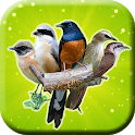 Suara Pikat Burung Liar Mp3 Offline icon
