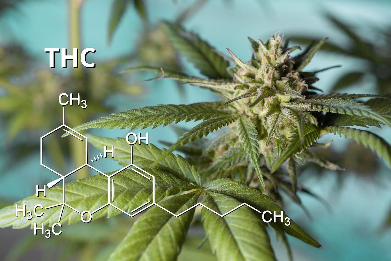 THC makeup of marijuana