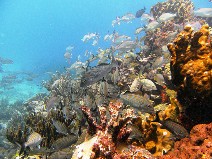 Manchones Reef, Cancun Mexico (25 Best Dive Sites in the World to Put on Your Bucket List).