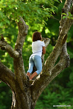 Photo: Young lady hanging out in a tree at Burton Island State Park by Raven Schwan-Noble