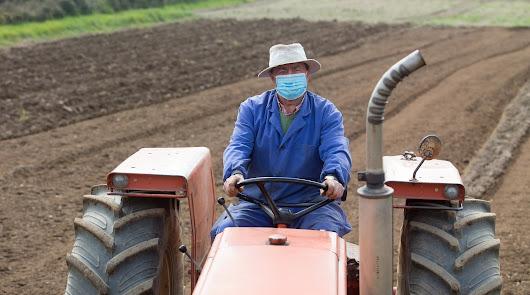 El Gobierno revisa con las CCAA el protocolo contra el Covid en la agricultura