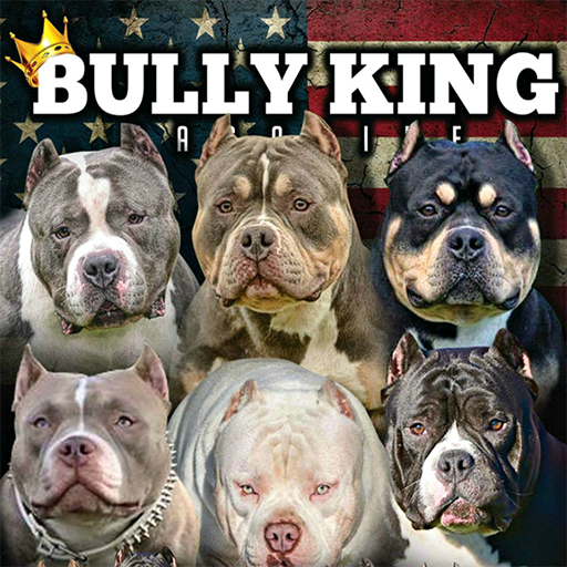 BULLY KING Magazine - Apps on Google Play