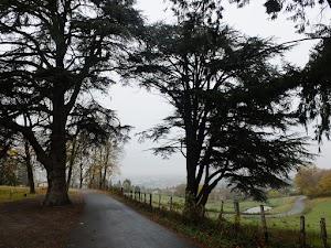 Zakochane drzewa na drodze do La Tourette
