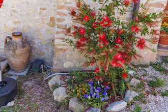 Photo: Flowers in garden at Camiano Piccolo