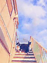 Photo: Painted in Waterlogue